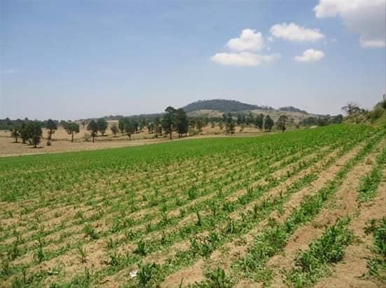Rancho agricola y forestal Oyameles